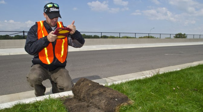 Salt-tolerant sod and seed mixes bring greener roadsides to Minnesota