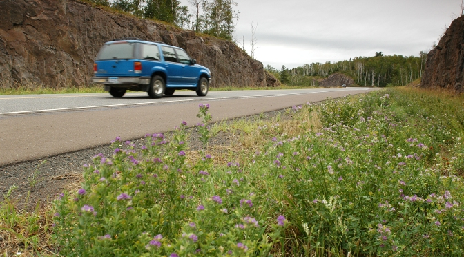 Car driving on road with flowers blooming on roadside