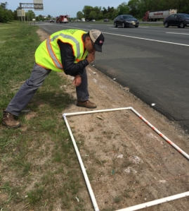 A researcher checks a turfgrass test site next to an asphalt roadway. A white-framed grid overlays the 5-by-3-foot plot, which shows very little growth.