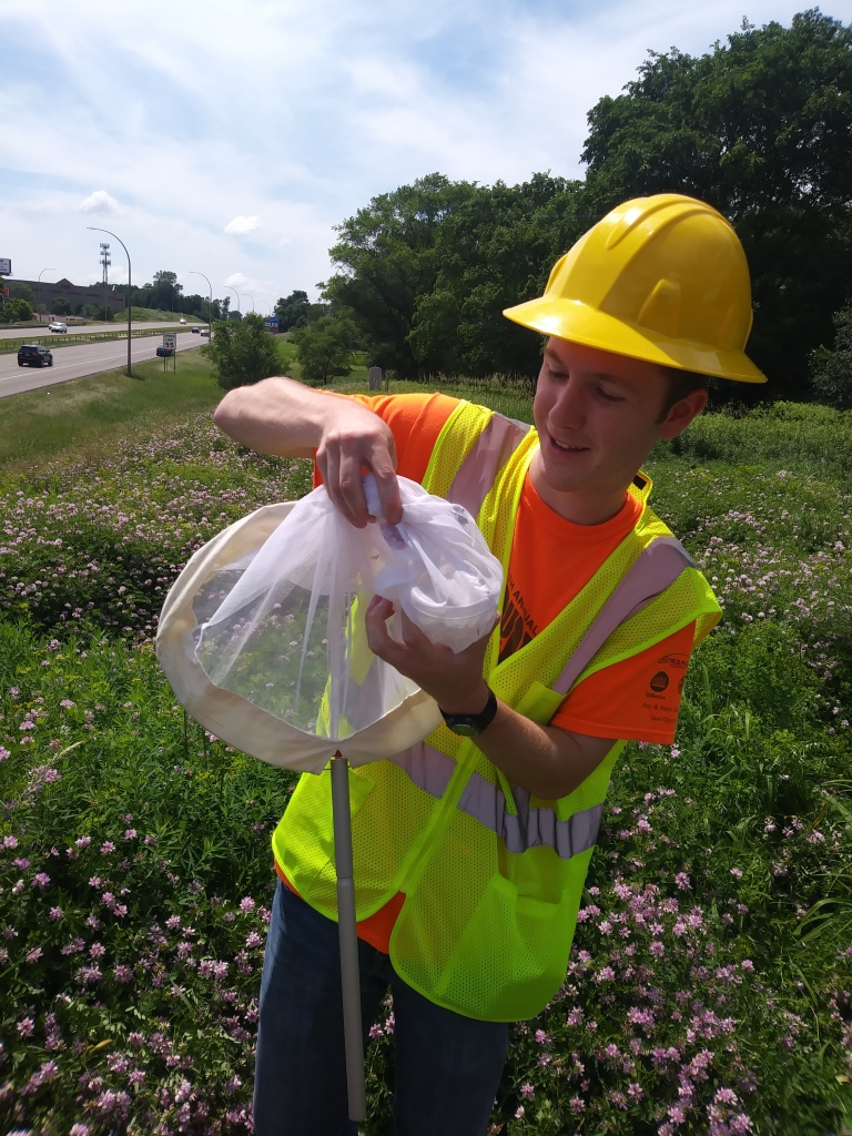 A researcher uses a net to gather bees alongside State Highway 36 West.
