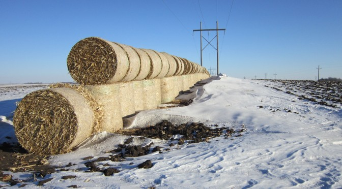 A line of stacked hay bales that work as a snow fence.